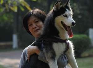 当心过度依赖狗狗也是心理疾病